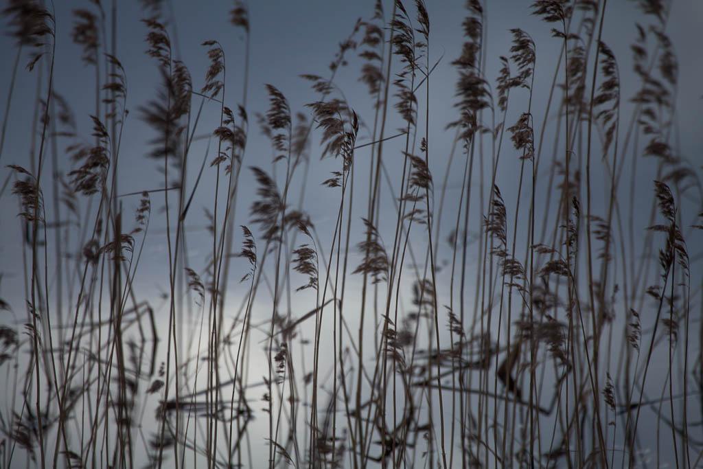 Vid Hargssjön